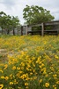 3 - Wildflowers Inside Corral Fence at Powderhorn Ranch, Vertical