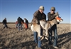 Pronghorn Capture Release- B2e4744