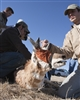 Pronghorn Capture Release- B2e4891