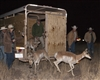 Pronghorn Capture Release- B2e4924