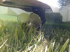 Seagrass, Motorboat Propeller