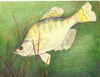 State-fish Art Contest 2009 10-12 1st M. Sone