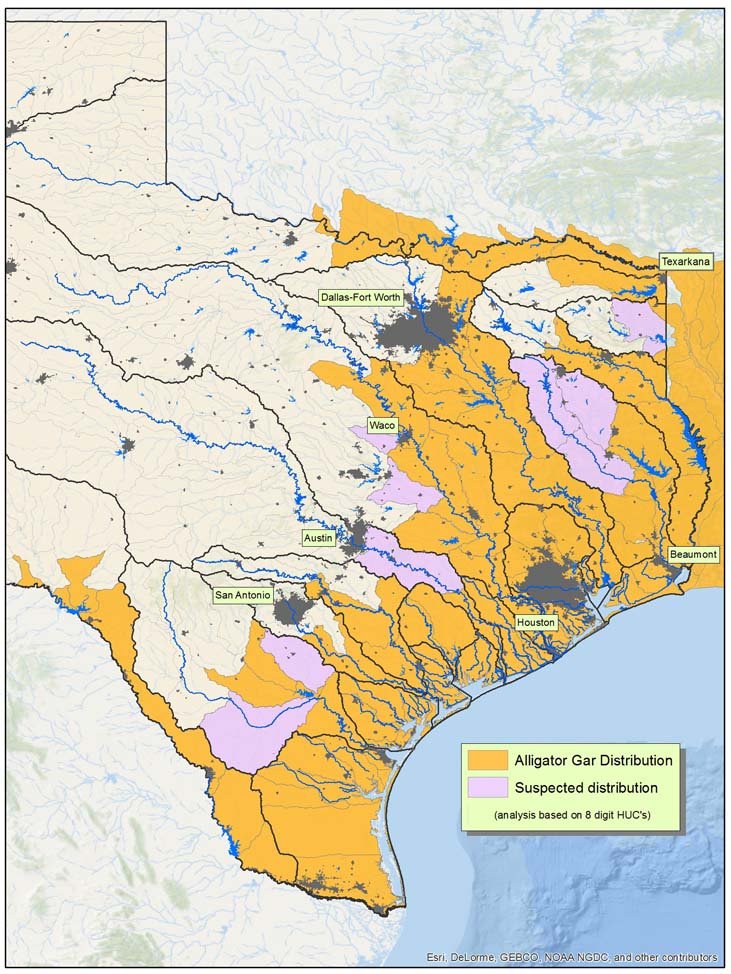 Alligator Gar Range Map - Texas