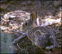 TPWD: Rabbits and Hares – Introducing Mammals to Young