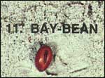 Bay-Bean Sea-bean