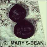 Mary's Sea-bean