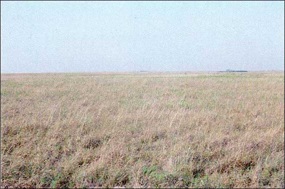 Tpwd Gis Vegetation Types Of Texas Grassland