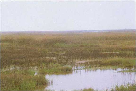 TPWD: GIS Vegetation Types of Texas -- Marsh