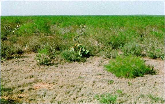 Tpwd Gis Vegetation Types Of Texas Brush
