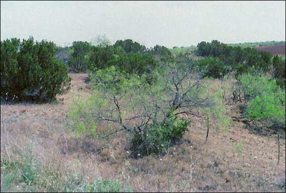 TPWD: GIS Vegetation Types of Texas -- Brush