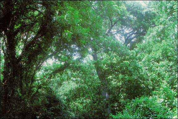 Tpwd Gis Vegetation Types Of Texas Forest