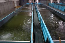 Tpwd texas freshwater fisheries center hatchery for Fish hatchery texas