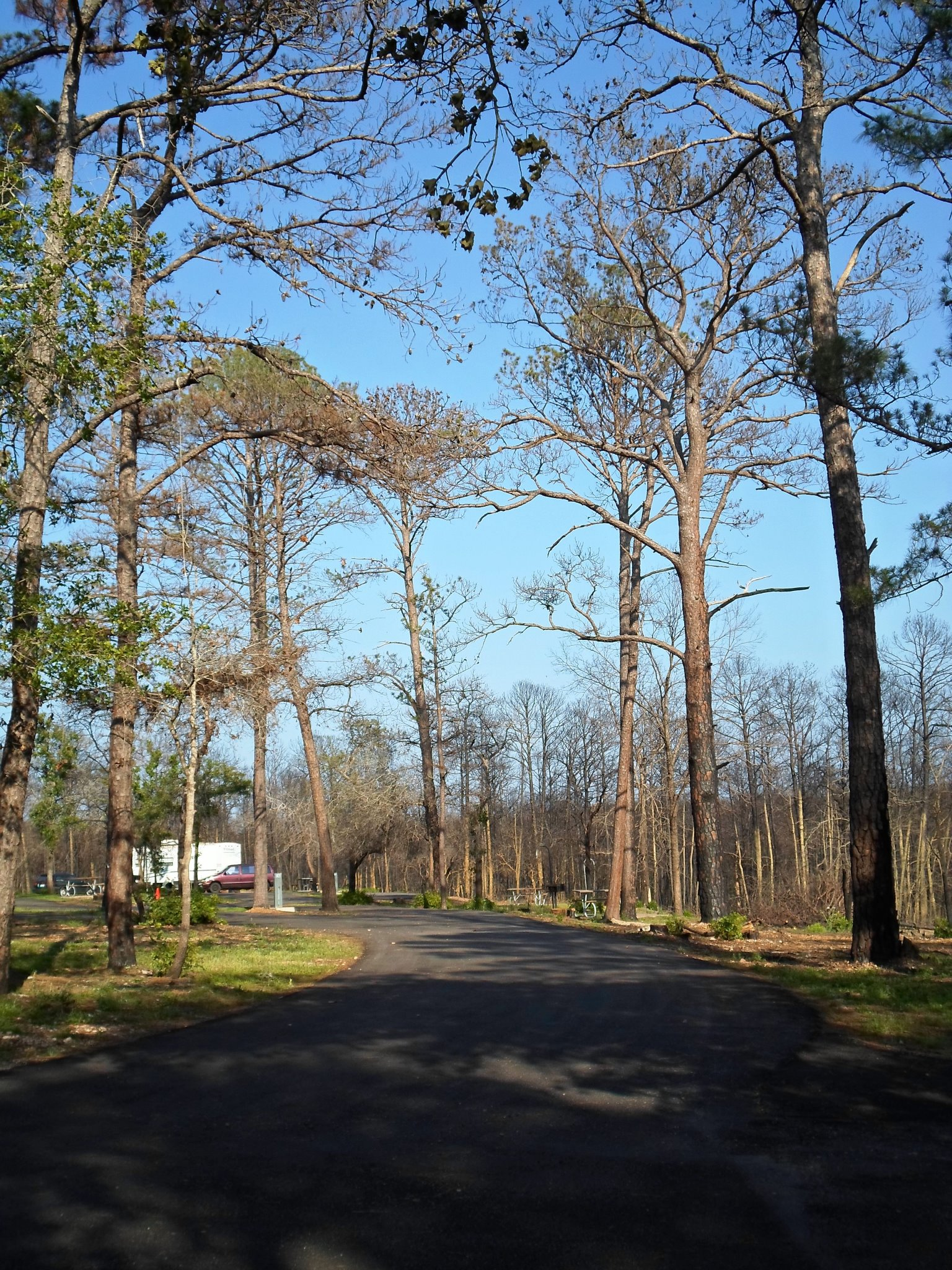 Campsites #16-21 in the Piney Hill Campground.