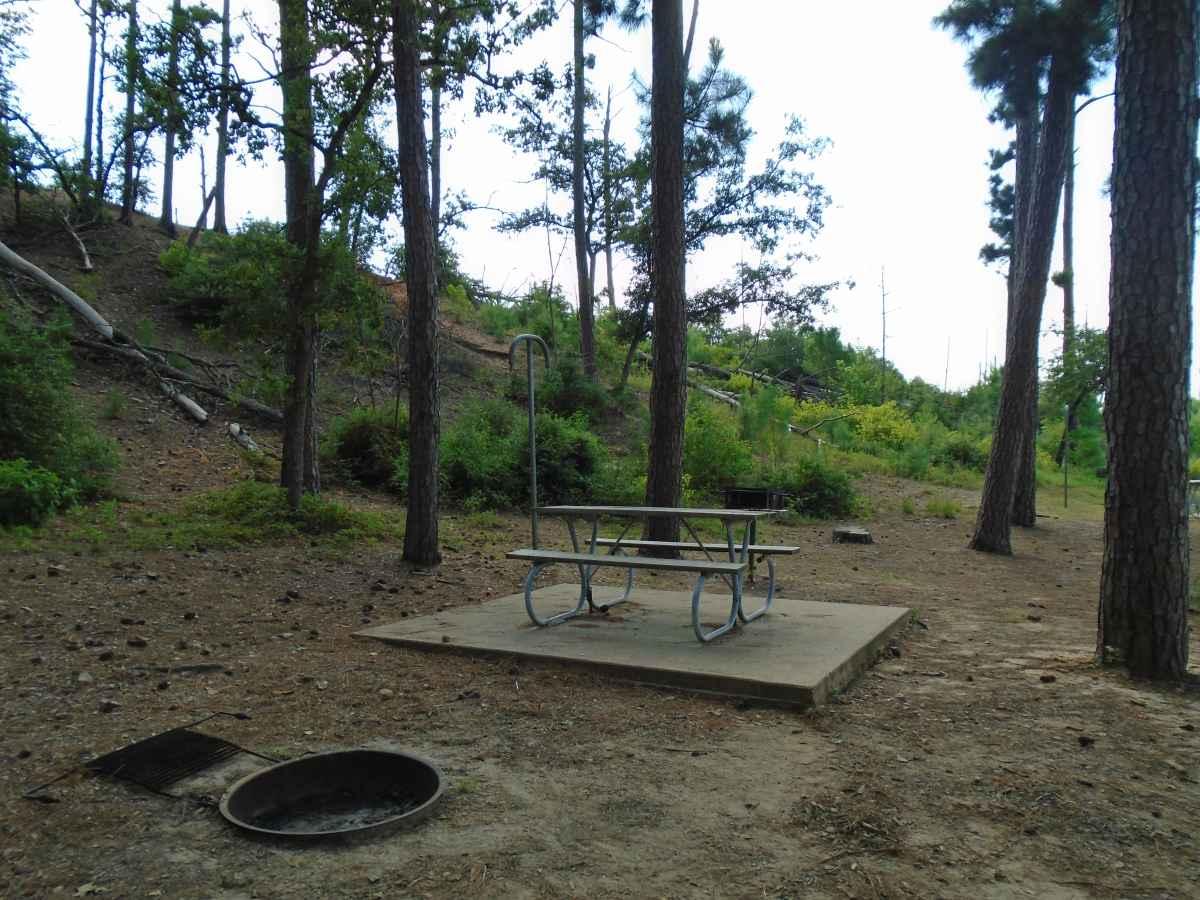 Campsite 50 in the Copperas Creek Camp area.