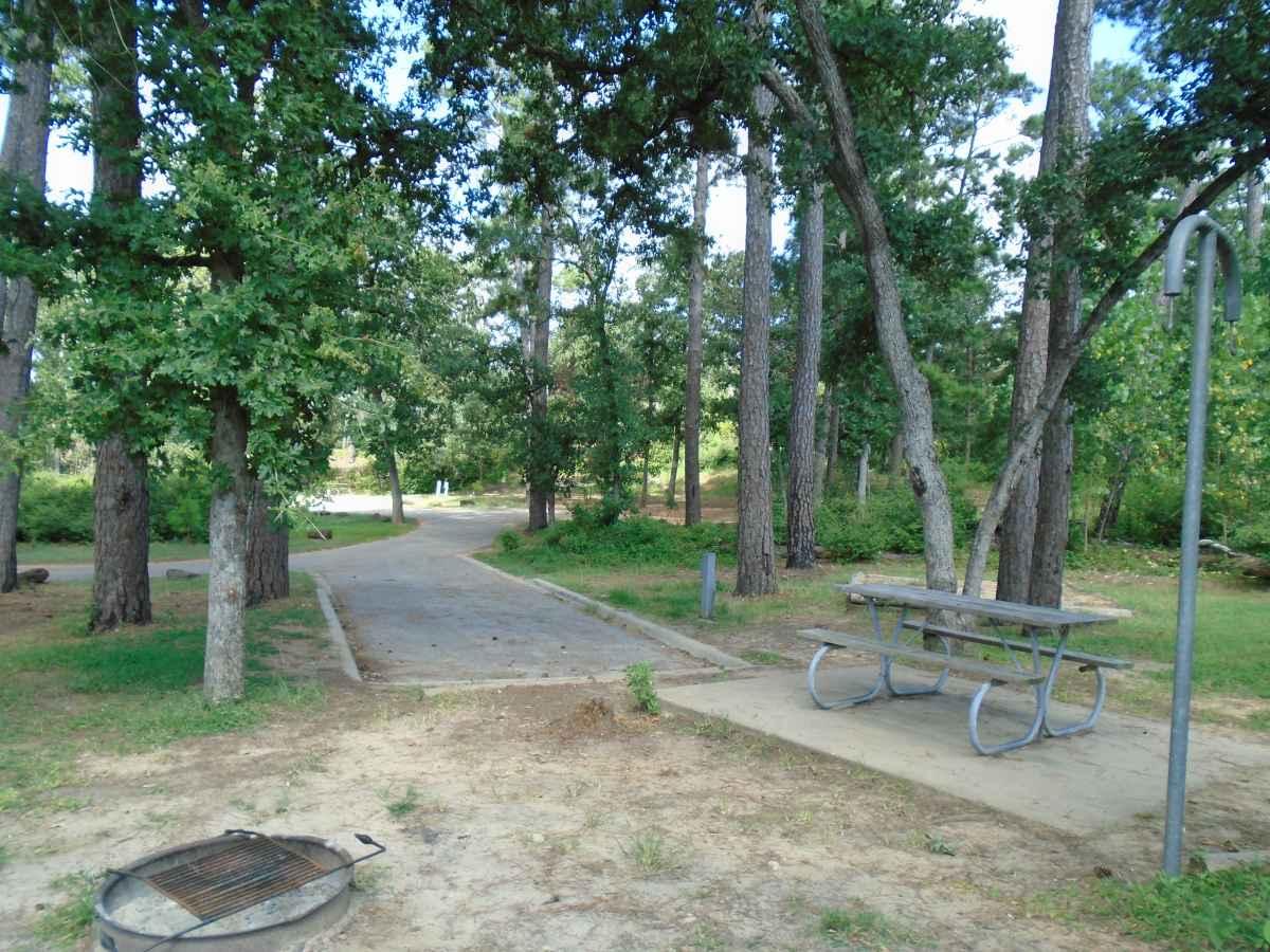Campsite 56 in the Copperas Creek Camp area.