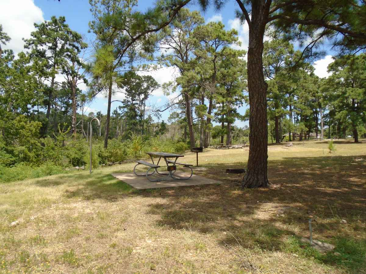 Bastrop State Park Basic Campsites Tent Only In Deer Run