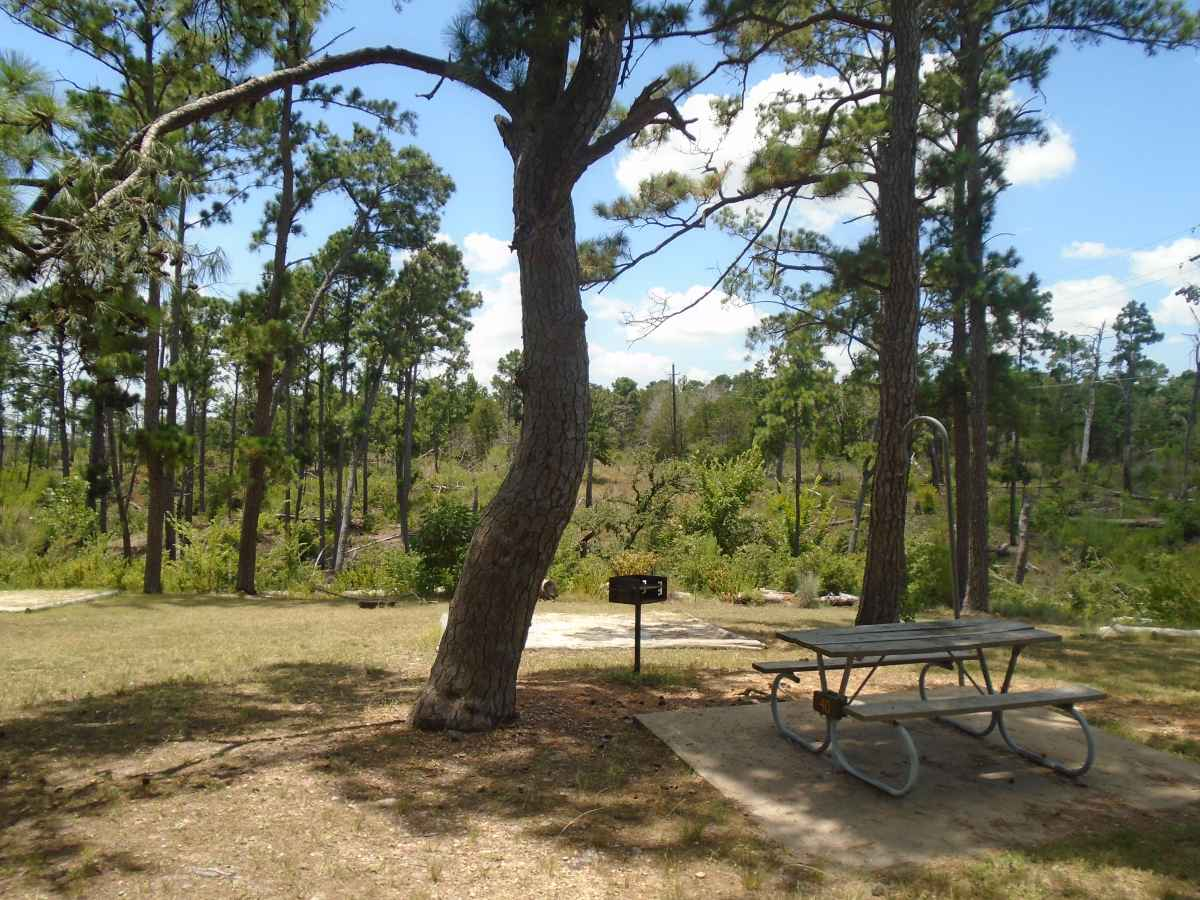 Campsite 40 in the Deer Run camping area.