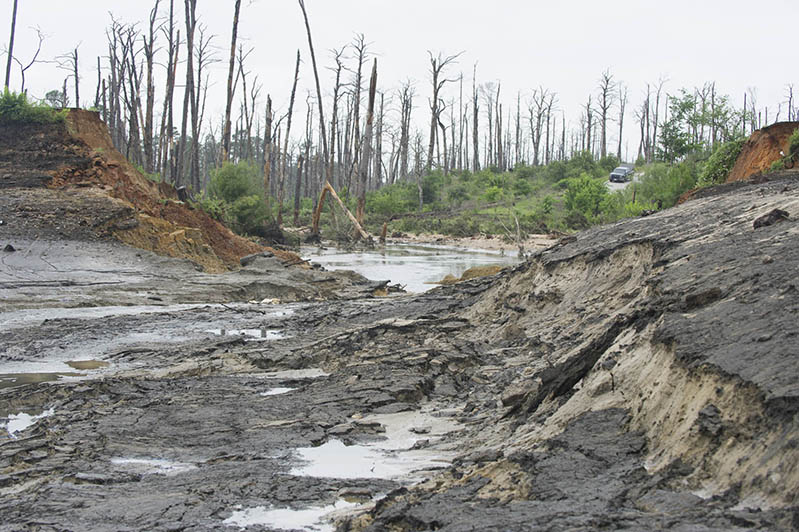 Bastrop State Park Wildfire Amp Flood Damage Texas Parks