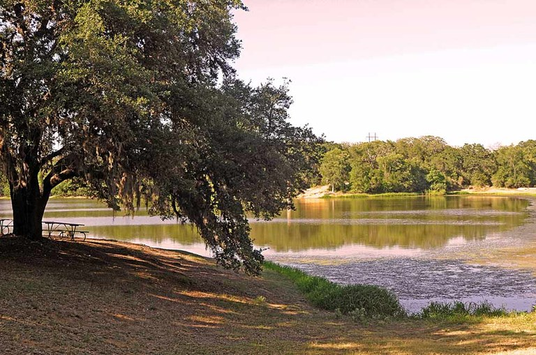 View of lake with large oak tree on bank.