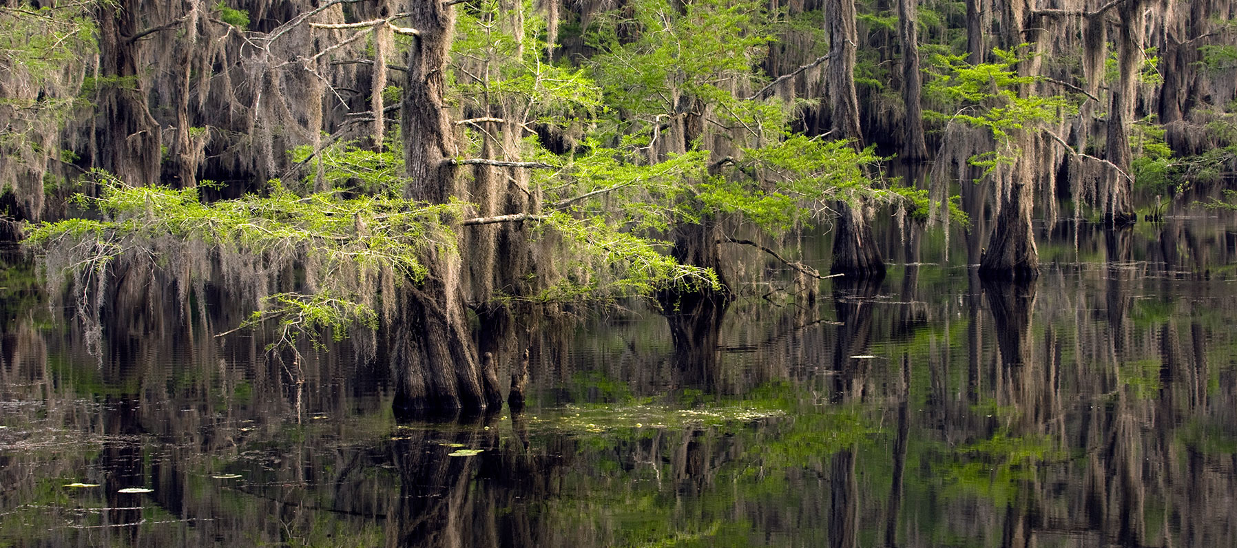 A maze of bayous thick with ancient bald cypress trees and more than 70 species of fish. There's plenty to lure you to the only natural lake in Texas.
