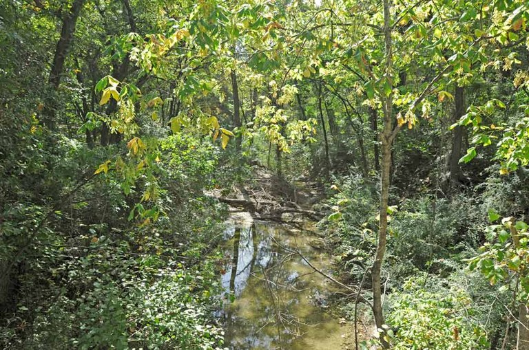 Creek flowing through wooded area.