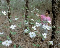girl looking at dogwood blooms in the forest