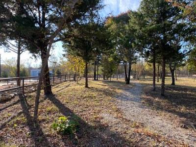 OHV trail through trees along fenceline