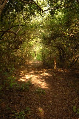 Shady trail with trees and shrubs arching overhead