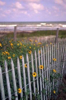 White picket fence with flowers and the beach behind.