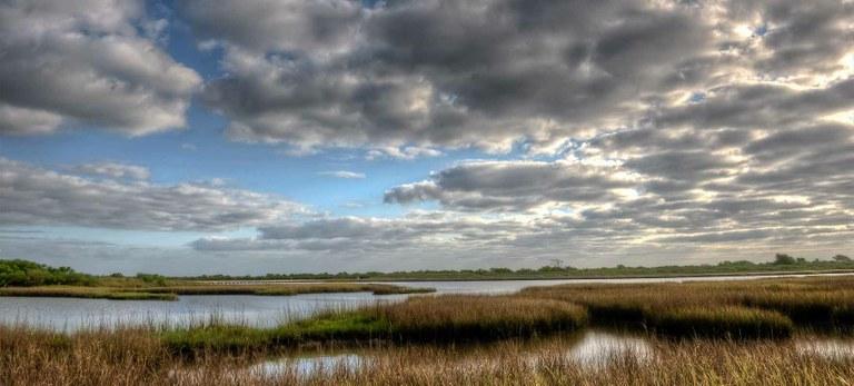 Marsh and sky