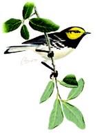 Small bird perched on an Ashe juniper limb