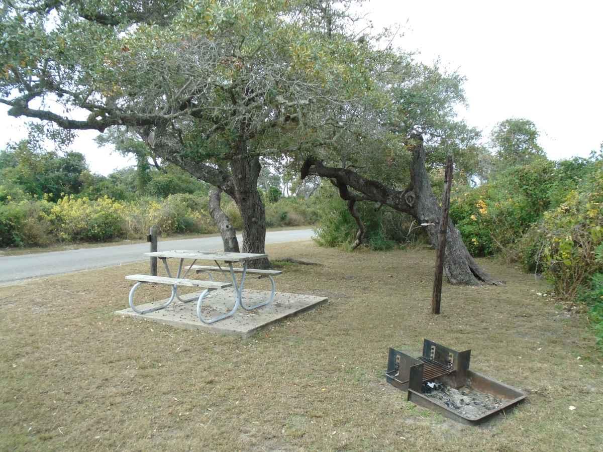 Standard Walk-in Campsite 204.