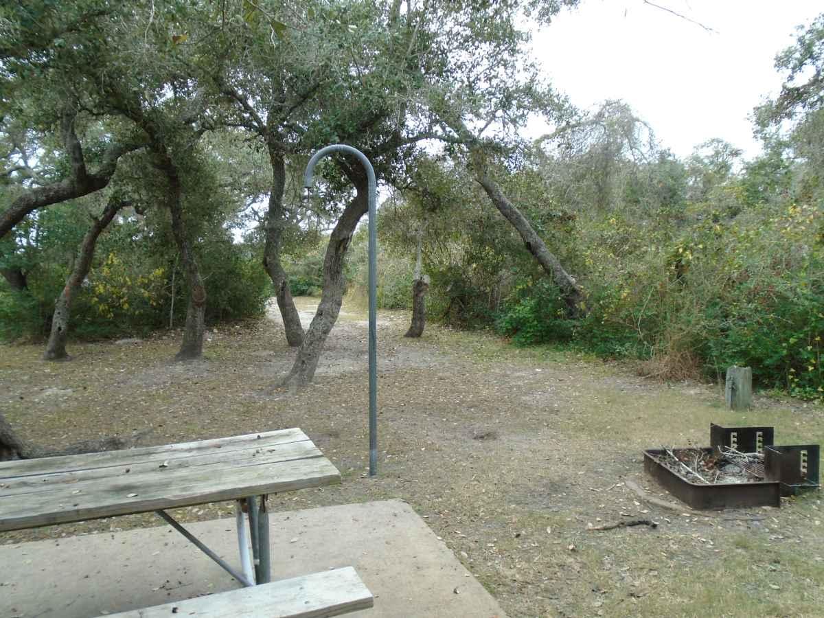 Standard Walk-in Campsite 219.