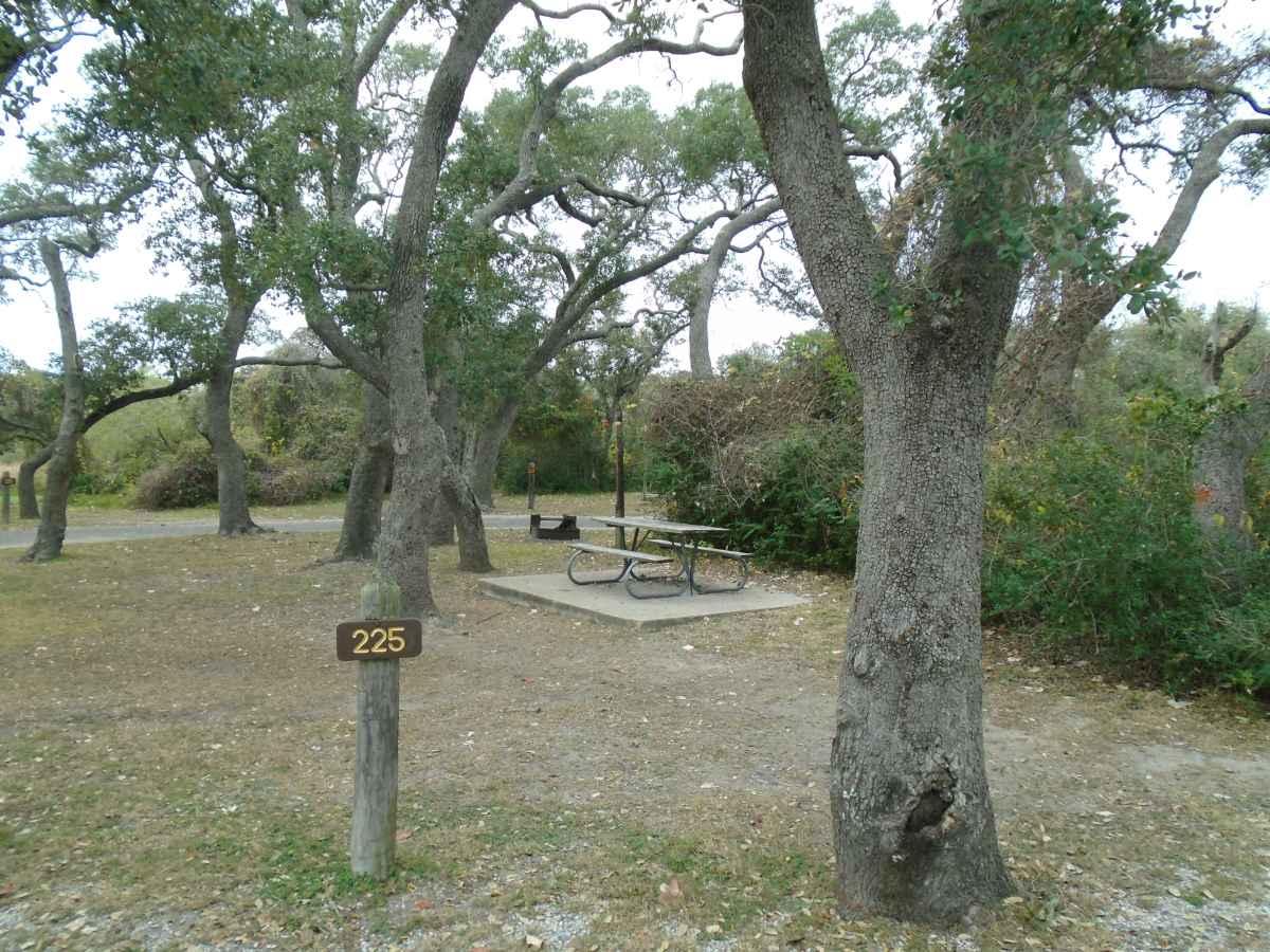 Standard Walk-in Campsite 225.