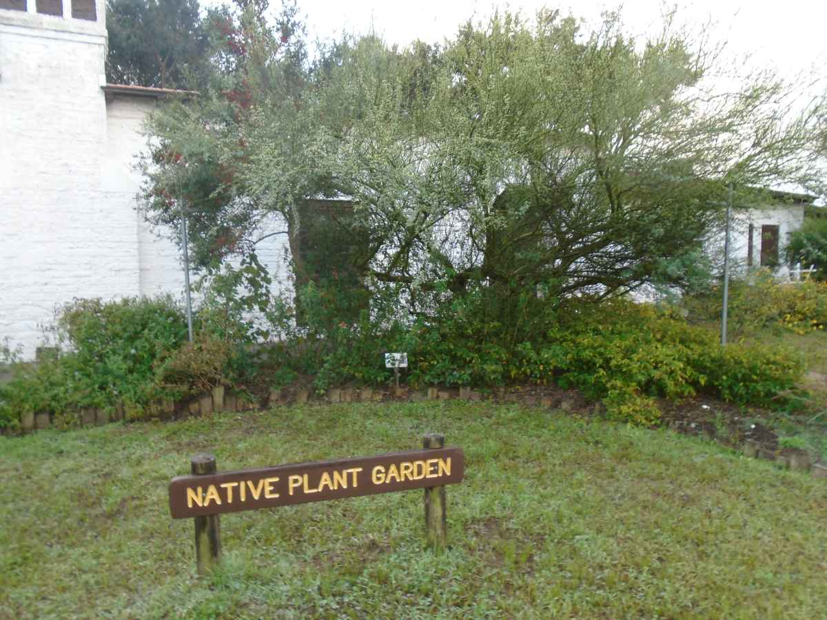 There is a native plant garden outside the Rec. Hall.