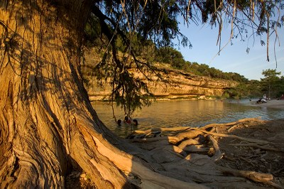 Looking past the trunk of a bald cypress tree at the river at sunset.