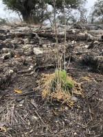 Small green plant against burned and rocky landscape