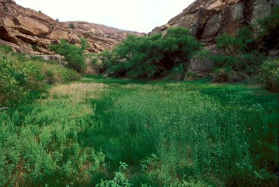Moist habitat at base of hills