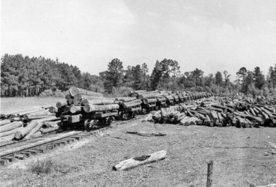 Logs piled up on railroad cars and beside tracks