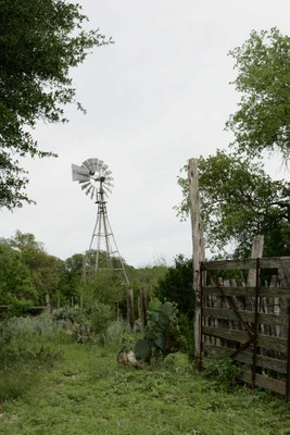 windmill and overgrown corral fence