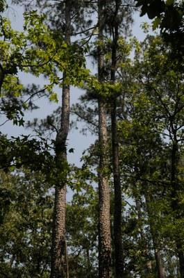 Trees at Lake Livingston