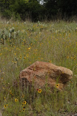 Large red rock in a field of prickly pear and wildflowers.