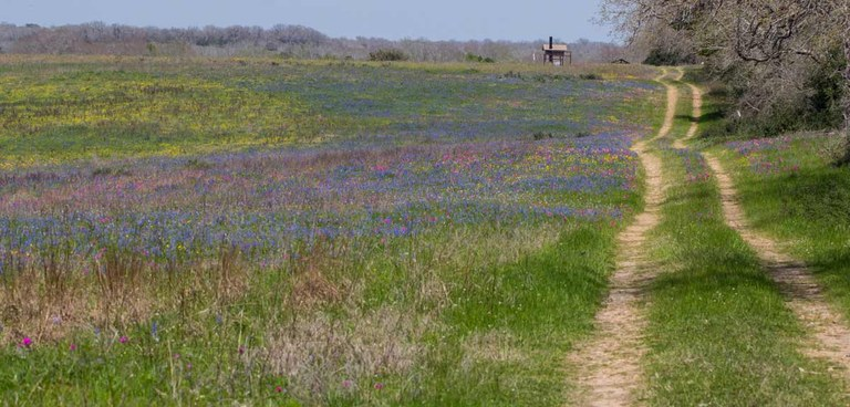 View of trail with wildflowers and brush.