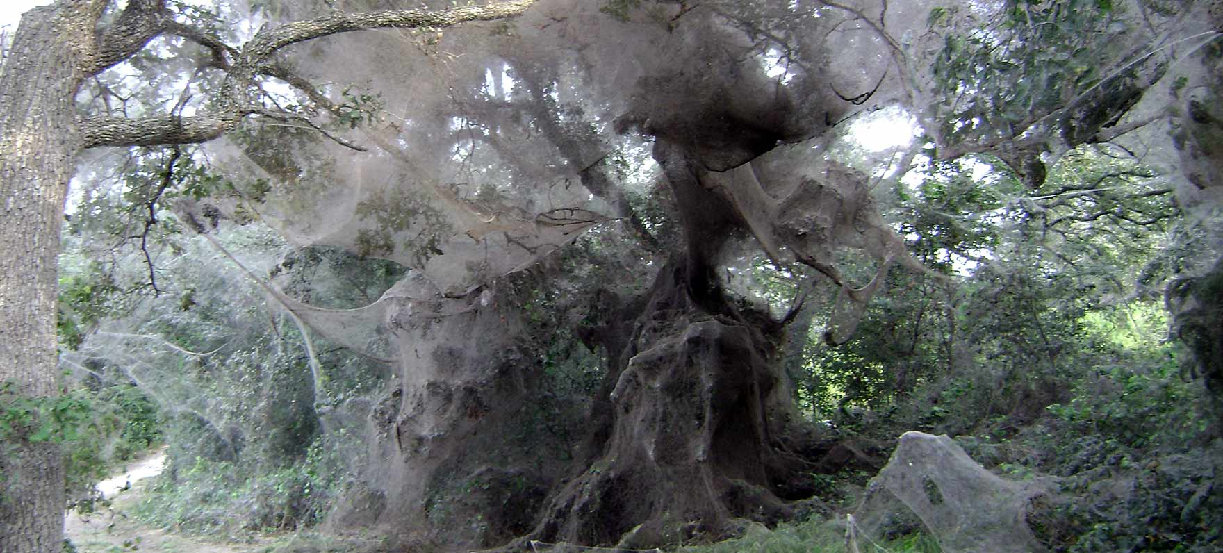 Lake Tawakoni State Park is known for the largest spiderweb ever documented.
