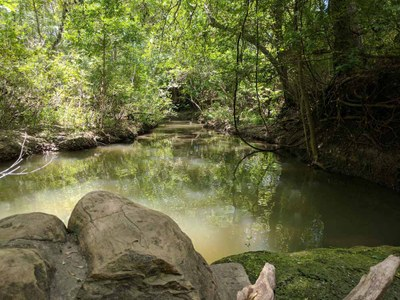 View of small, quiet creek with trees hanging over.