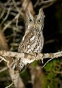 Owl perched on tree branch
