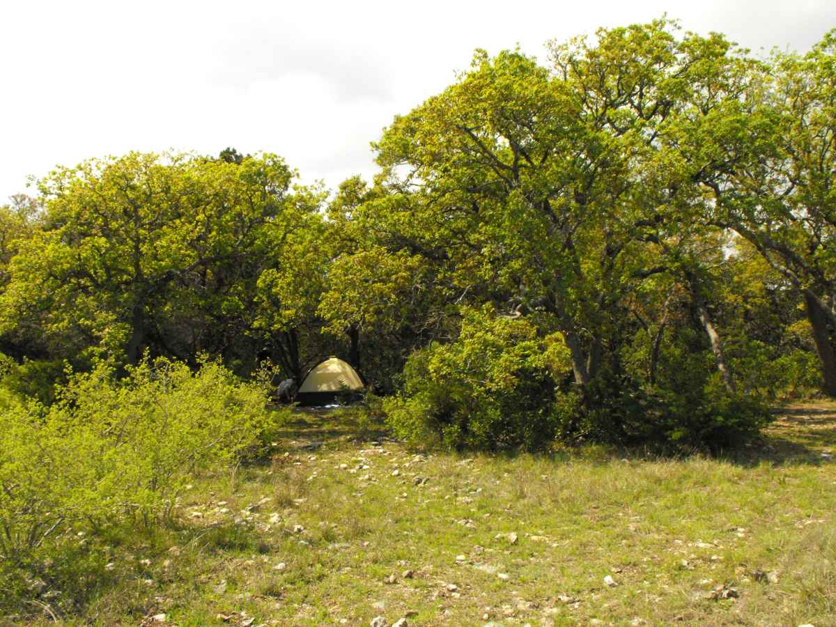 Another view of Primitive Camping Area D with a tent in the background.