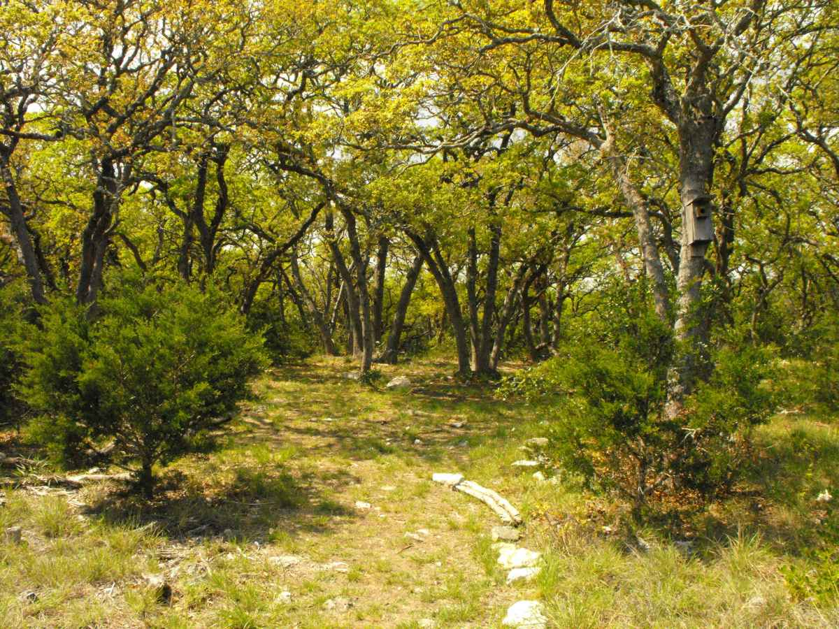 Another view of Primitive Camping Area D.