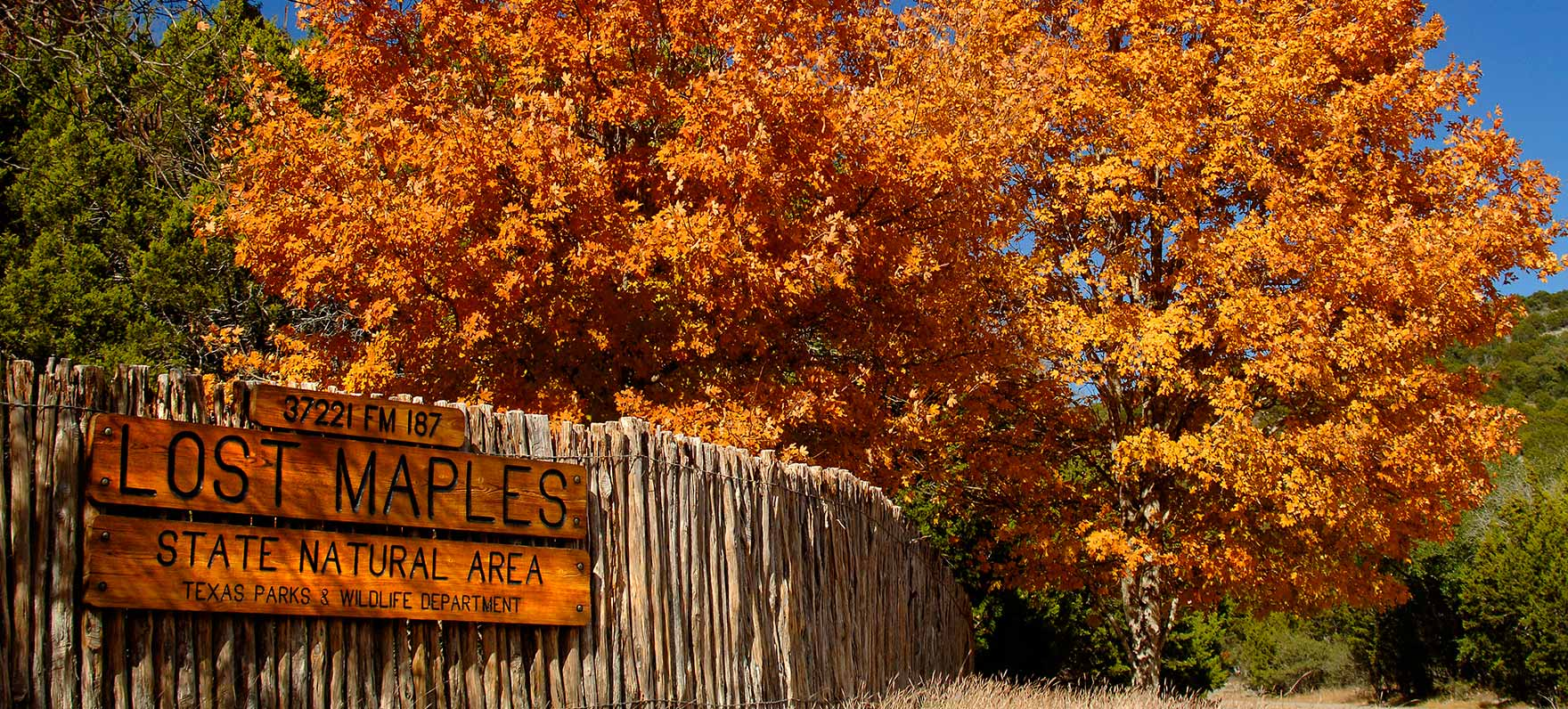 Where the bigtooth maples turn spectacular colors of red, orange and yellow; and nature proves that Texas does have four seasons, after all.