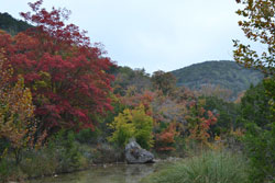 fall foliage picture from November 7, 2011